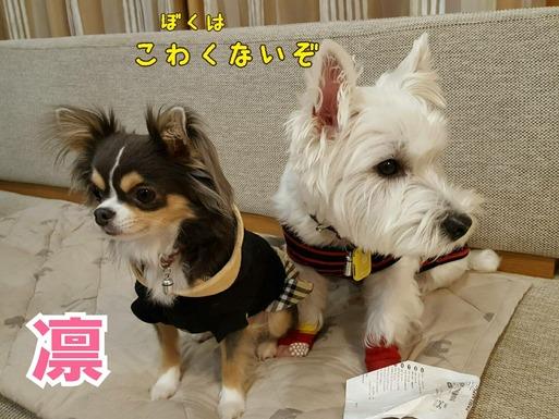 【犬】ねぇさん、どうぞ前へ