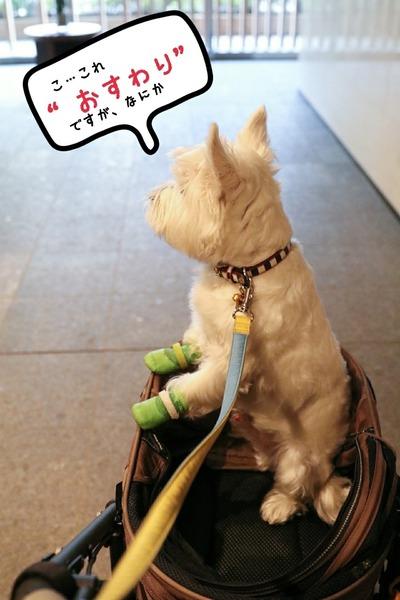 【犬】毎日ハッスルゆきっつぁん