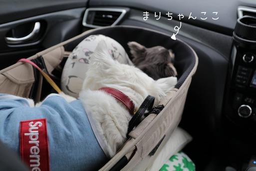 【旅】8㌔の白犬の枕は~