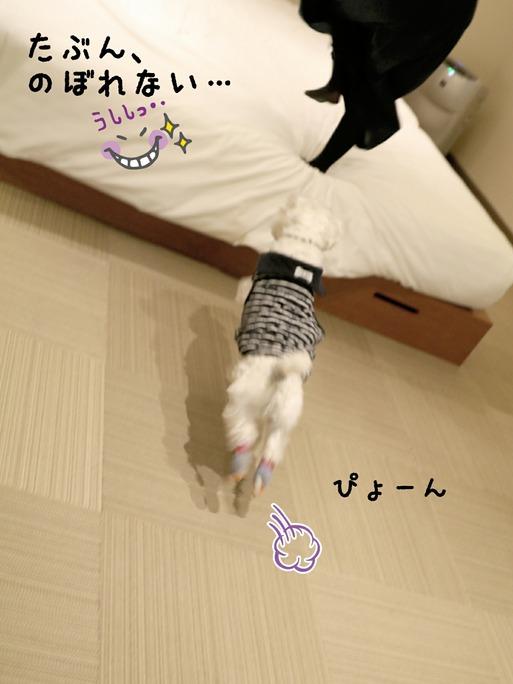 【犬】ゆきちの失敗