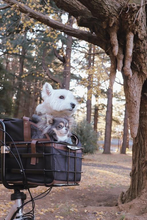 【犬&ウエスティ】アムロちゃんの聖地の木はとっても神秘的だった!ドッグラン