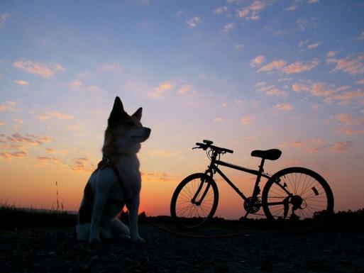 【日記】ワンコと乗れる自転車奮闘記② ~安全に犬をのせたい~