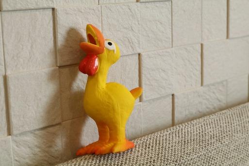 【犬】気に入ってくれているようで・・・ 幸せの黄色い鳥君。