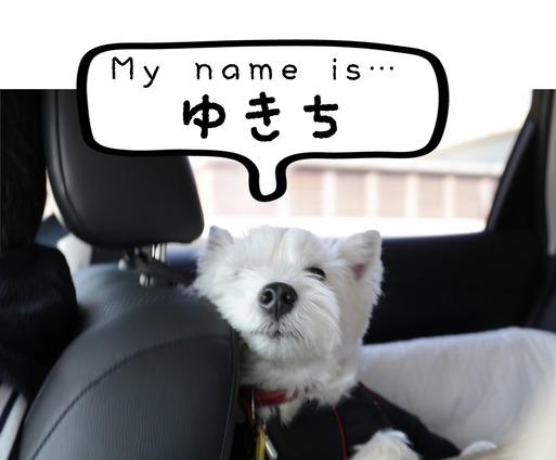 【ウエスティ】新一万円札の渋沢栄一に。白犬ゆきちの危機