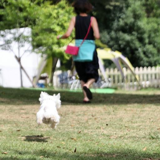 【犬旅】小谷流の里 ドックラン編