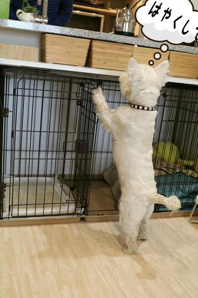 ウエスティ 犬