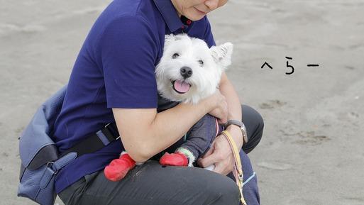【犬旅】好きだった・・はずの九十九里の海岸