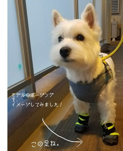 【犬靴】 靴物語⑥  ~犬靴をウエスティの足の短さに合わせてみようと思った・・・。が