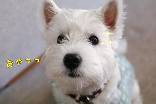 【犬】コング