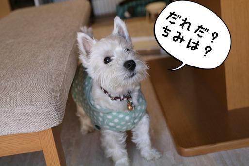 【犬】不審者?現る