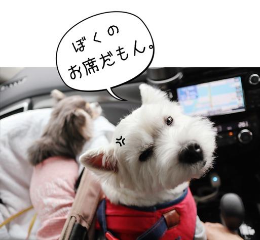 【インターペット】白犬の戦略