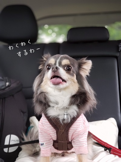 【犬】偵察