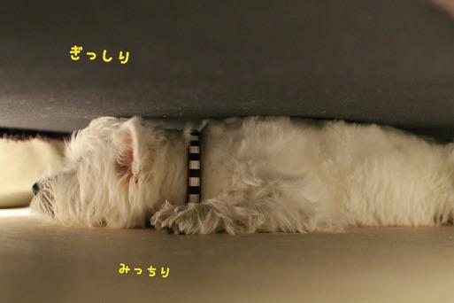 ソファーの下