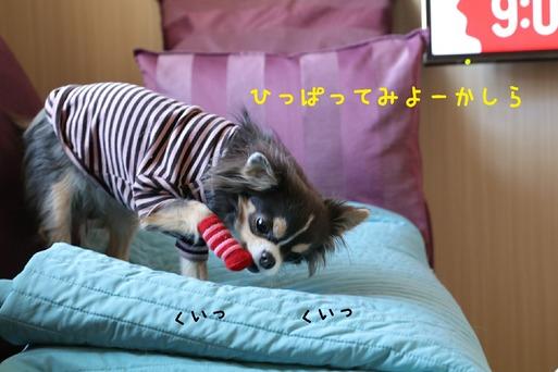 [画像:72413016-s.jpg]