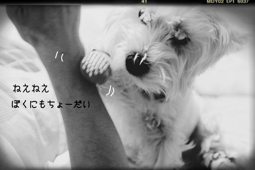 ビバ!!ボーナスヽ(^o^)丿