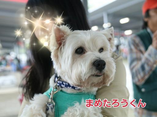 【ウエスティパーティ2017】お友達編②と 名刺交換のオリジナルお菓子