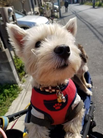 【犬】思いっきりドックラン
