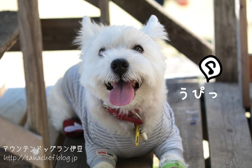 【犬旅】マンテンドッグラン 最高!!