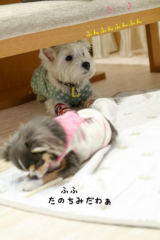 【犬】かけひき
