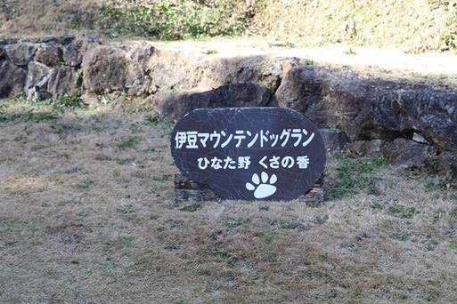 【伊豆旅行】マウンテンドッグラン