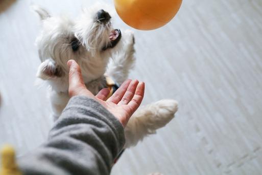 【犬】ブランチュ~、ご協力お願いします!!