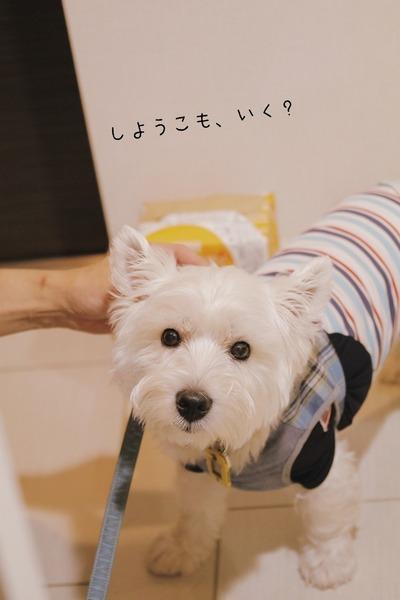 【犬】あさんぽ