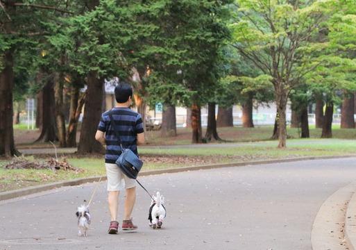 【日記】代々木公園に自転車でいきたい。