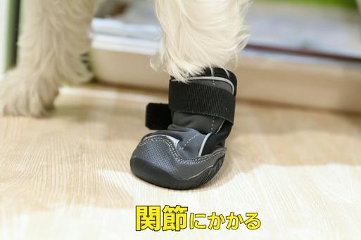 【犬靴】靴ものがたり④ ~意外と靴が履けないウエスティ