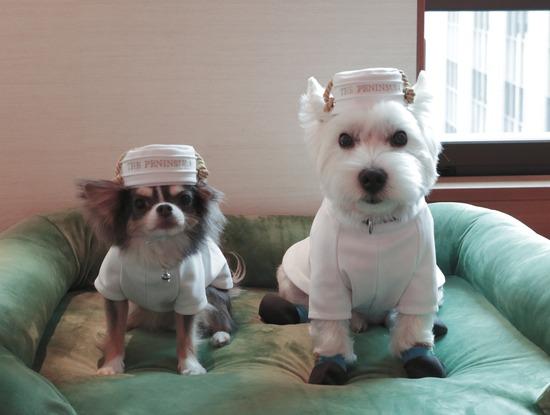 【犬と旅】ホテルついたぞ