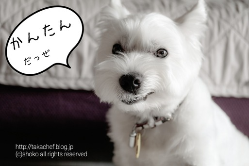 【犬グッズ】お気に入りおもちゃ(ビジーバディツイスト) ~ウエスティ編~