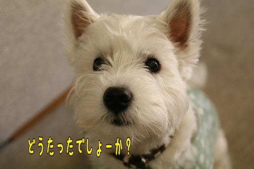 【犬】今日のお怒り具合は・・・