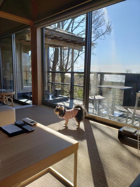 【犬】レジーナリゾート