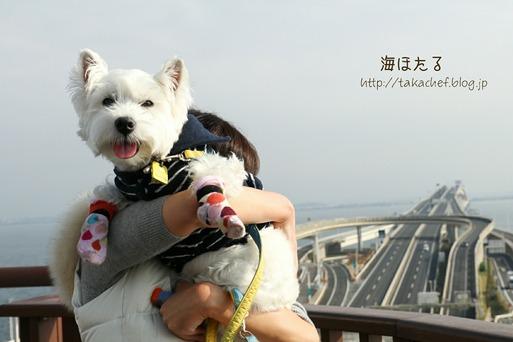 【犬旅】休憩!