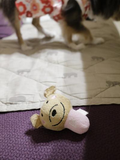 【チワワ】思い出のおもちゃ。
