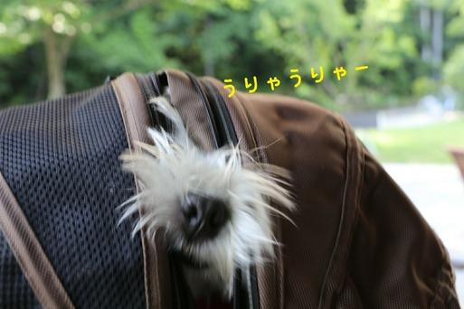 【犬旅】軽井沢 ハルニレテラス