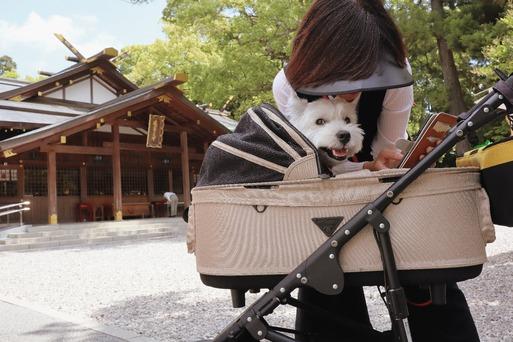 【犬と三重の旅】猿田彦神社へいったぞ~。と、初ご朱印。