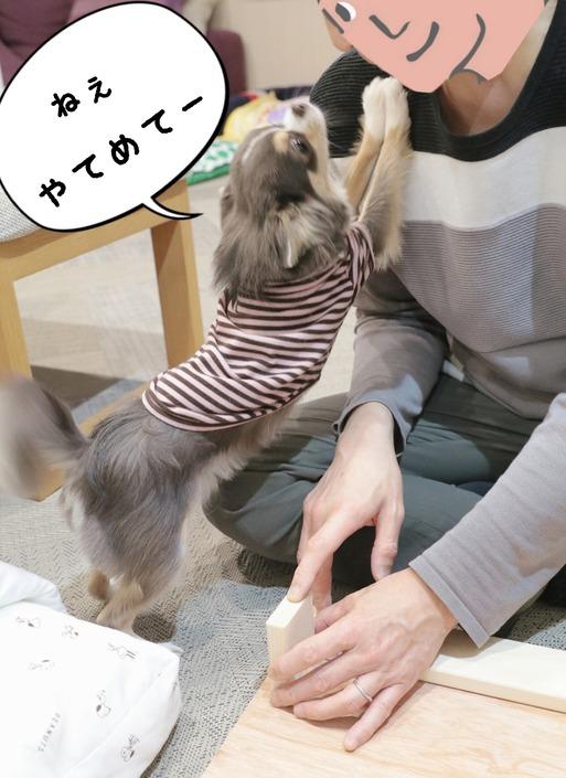 【チワワ】DIY まりちゃんのベッド☺