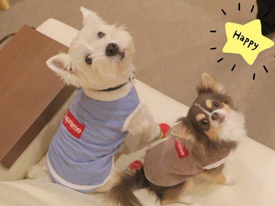 【犬グッズ】シュプリームの犬服 と、犬が洋服を着る意味も考える。