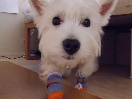 【犬】アレルギー検査の結果がでたぞ~~  その①