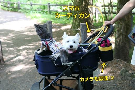 【犬旅】池に落としちゃった件の詳細