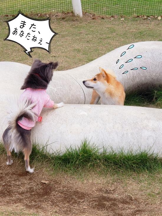 【犬】ドッグラン!