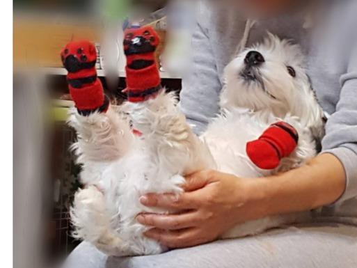 【ご質問のお返事】犬のケアの仕方。
