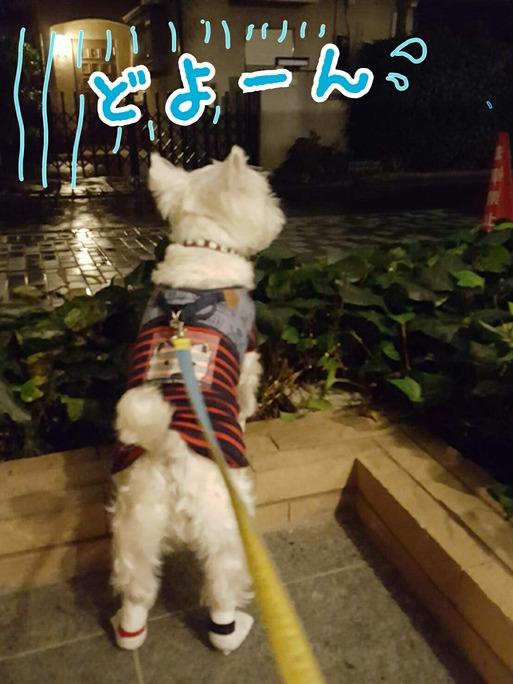 【犬】お散歩に行くぞ~~ お~ヽ(^o^)丿のはずが。