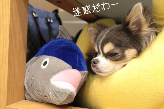 【犬グッズ】新しいおともだち。