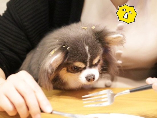 【犬】夜中のおやつと、貰い事故?