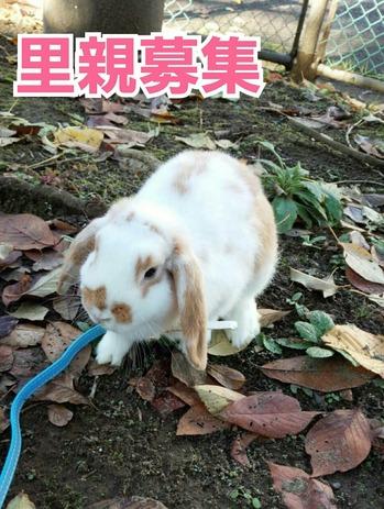 【里親募集!!】   ウサギちゃんのね