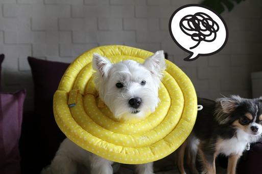 【犬】練習中