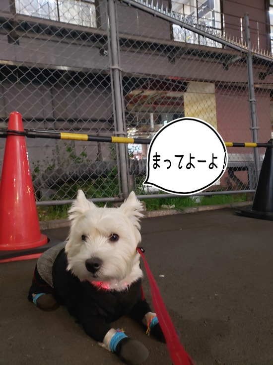 【犬】誰を待つ?