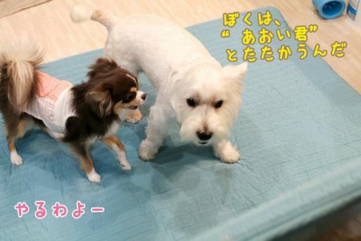 【犬】どいて~~