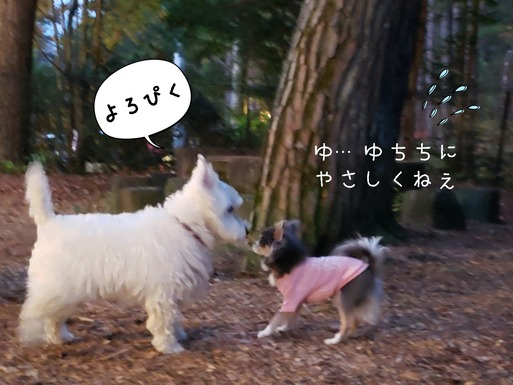 【犬旅】プリンスこうちゃんと!
